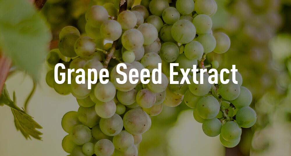 Grapes on vine - grape seed extract