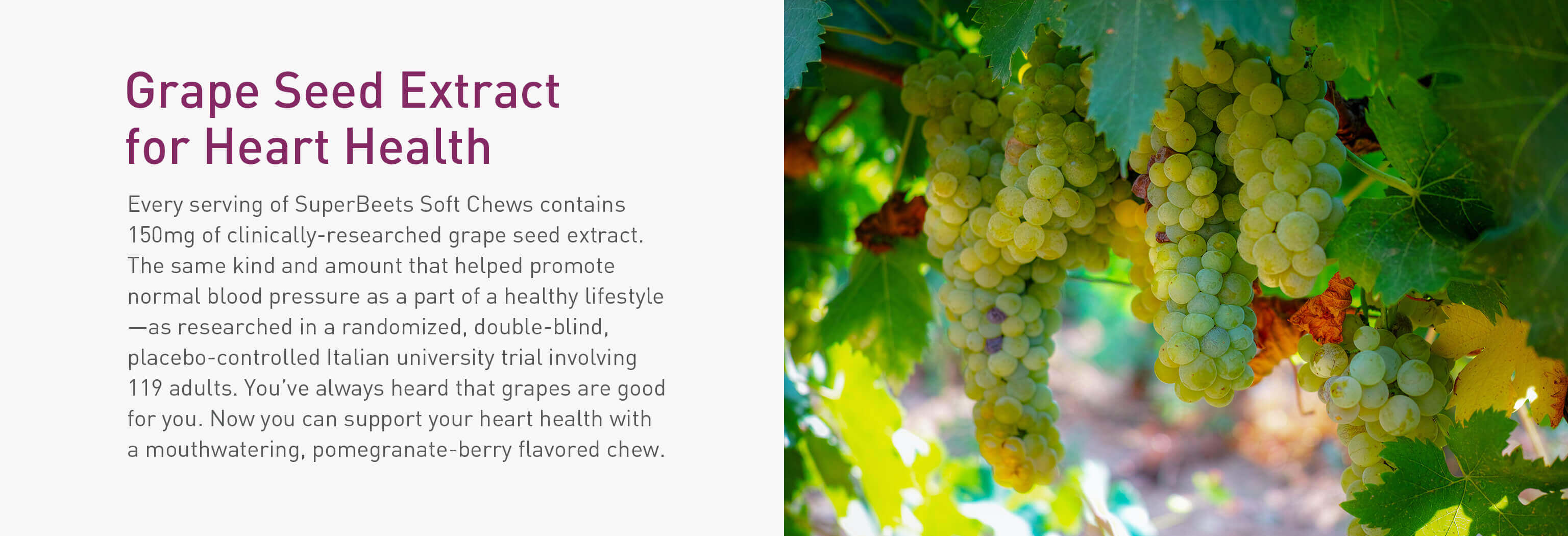 Grapes hanging from grapevine with description of grape seed extract for heart health